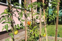2.-Szkolny-ogródek