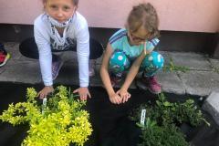 6.-Szkolny-ogródek