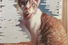 10.-Wystawa-Kotów-kot-nr-10