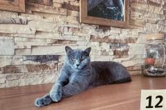 12.-Wystawa-Kotów-kot-nr-12