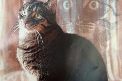 15.-Wystawa-Kotów-kot-nr-15