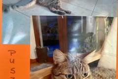 16.-Wystawa-Kotów-kot-nr-16