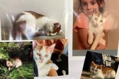 19.-Wystawa-Kotów-kot-nr-19