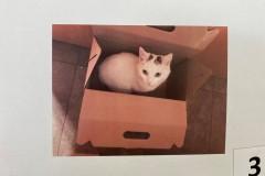 3.-Wystawa-Kotów-kot-nr-3