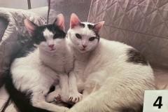 4.-Wystawa-Kotów-koty-nr-4