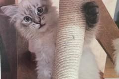 6.-Wystawa-Kotów-kot-nr-6