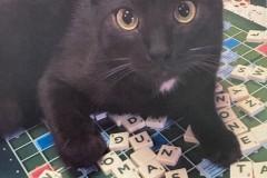 9.-Wystawa-Kotów-kot-nr-9