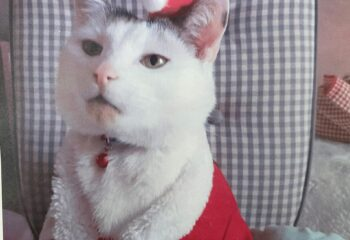 1. Wystawa kotów- kot nr 1